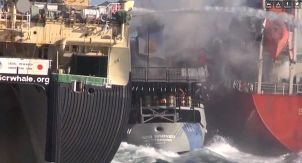 Sea Shepherd et un baleinier japonais