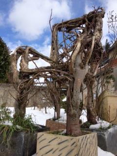 Les branches s'éloignent et se recoupent dans notre arbre généalogique. ©Peter Papay