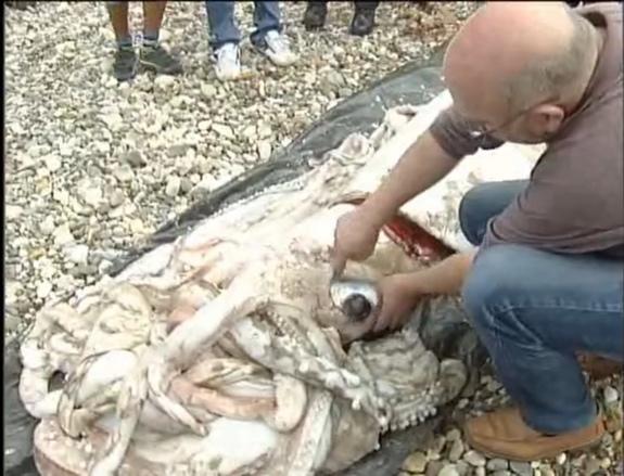 calamar géant
