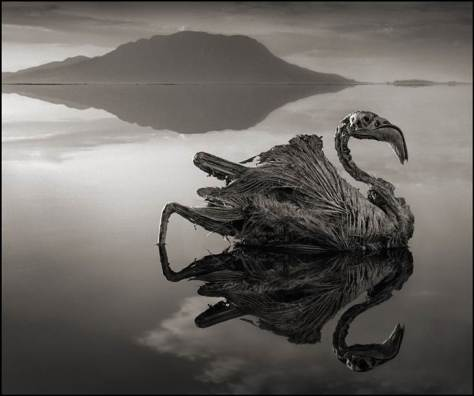Nick Brandt photo du lac Natron
