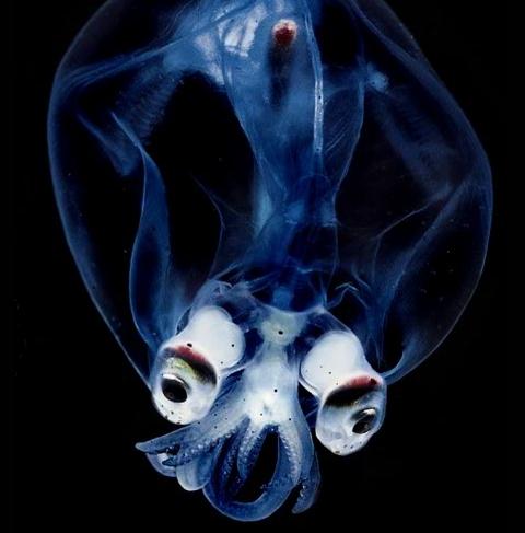 créature des abysses