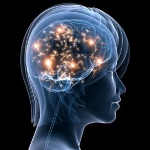 Cerveau en action