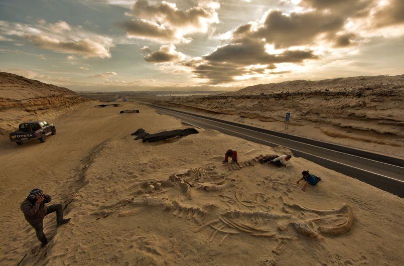 Squelette de baleine dans le désert d'Atacama